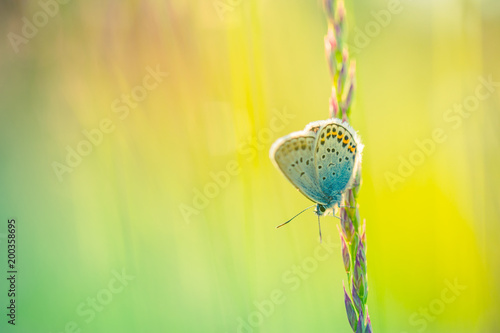 Fotobehang Zwavel geel Beautiful white butterfly and grass meadow in spring at Sunrise on yellow and orange background macro. Amazing elegant artistic image nature in spring, flower and butterfly