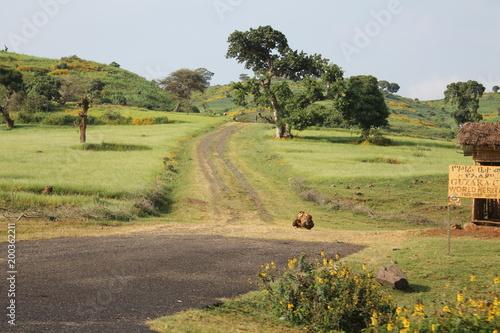 Staande foto Pistache Ethiopia