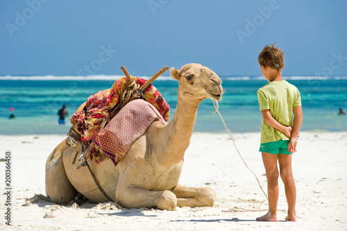 Keuken foto achterwand Kameel child and camel on the beach looking at each other