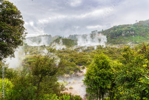 Poster Olive Spectacular Geothermal activity in Rotorua New Zealand
