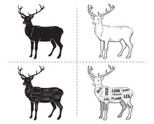 Deer Meat Cuts With Elements A...