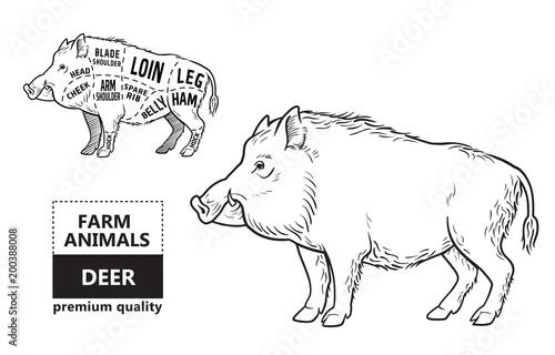 Fotomural Wild hog, boar game meat cut diagram scheme - elements set on chalkboard