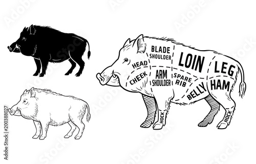 Stampa su Tela Wild hog, boar game meat cut diagram scheme - elements set on chalkboard