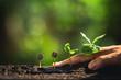 Growing Coffee Beans Watering sapling Natural light