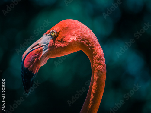 Garden Poster Flamingo Large Flamingo