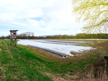 Wide Vaerial View Over Asparagus Plantation In Rural Area With Multiple Rows Covered With Sun-protecting Foil During Winter Spring - Moder Bio Organic Agriculture - Beautiful Sunflare Sunlight.