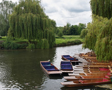 Cambridge Punts Await Rowers On The River Thames, Cambrdige, England