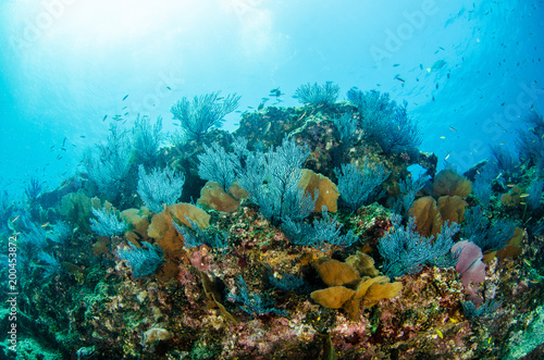 Coral reef scenics of the Sea of Cortez, Baja California Sur, Mexico.