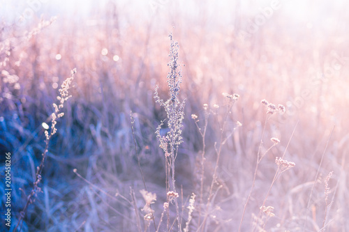 Photo Dry branches of grass in the spring early morning on a forest glade on a blurred background in a pink haze