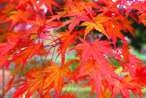 Foto op Plexiglas Rood 秋の公園の風景26