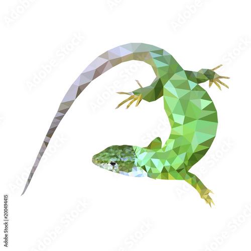 green lizard low poly design eps 10 Canvas Print