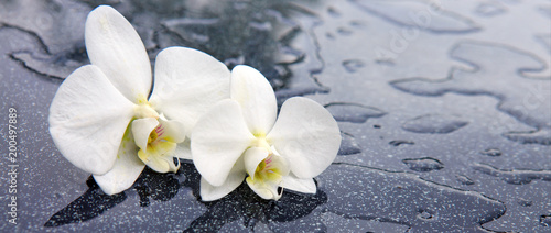 Fototapeta Two white orchid flowers . obraz