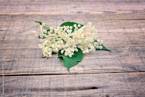 Bloom and leaves of elderflower (Sambucus nigra) on wooden table. Elderberry flower.