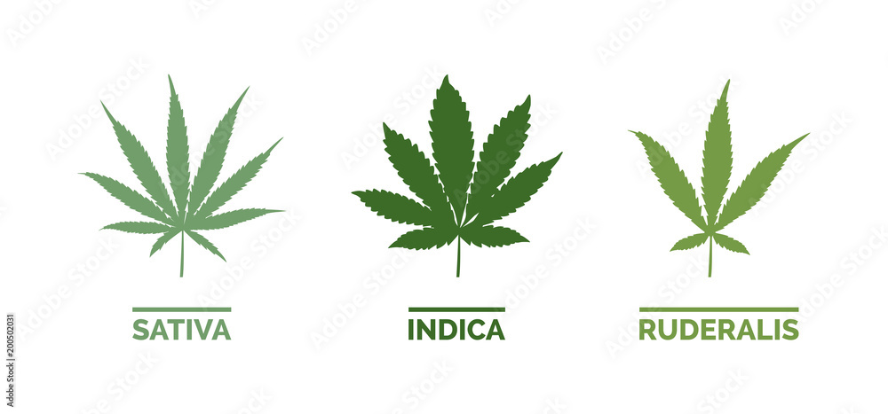 Fototapety, obrazy: Cannabis types and leaf shapes