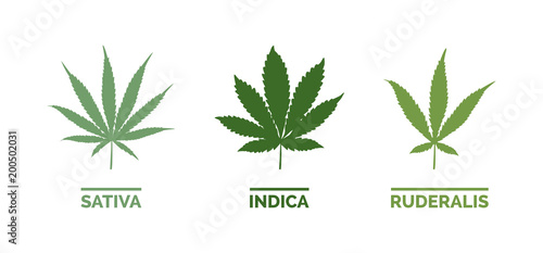 Cannabis types and leaf shapes Wallpaper Mural