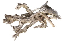 Dried Tree Root Isolated On Wh...