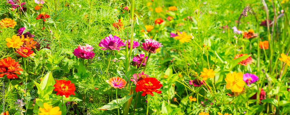 Summer meadow with colorful flowers as background - Panorama