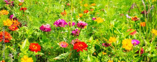 Plakat Lato łąka z kolorowymi kwiatami jako tło - panorama