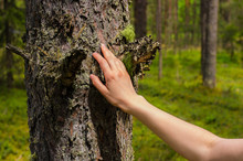 Woman In The Wood Touching The...