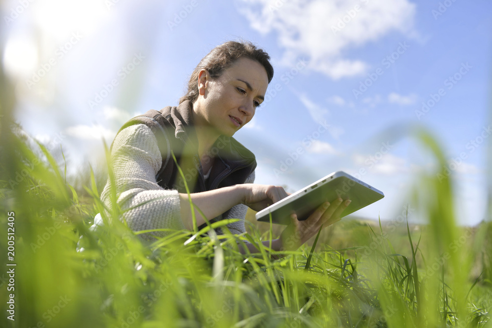 Fototapety, obrazy: Agronomist in crop field using digital tablet