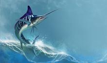 Striped Marlin On Sea, Fish Sw...