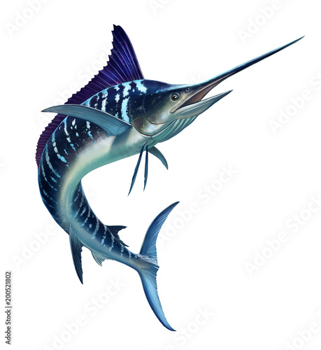 Fototapeta striped marlin on white, fish sword