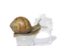 Snail Slime. Snail Cream Produ...