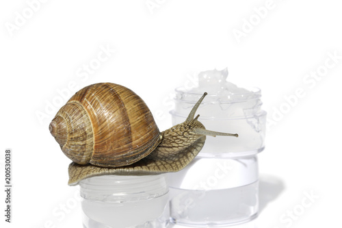 Snail slime. Snail Cream Product. Snail Extract Gel.cosmetic in ...