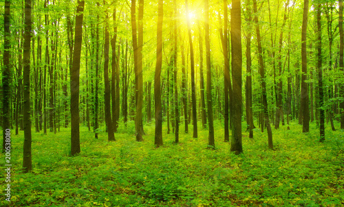 Fototapeten Wald Forest and sun rays
