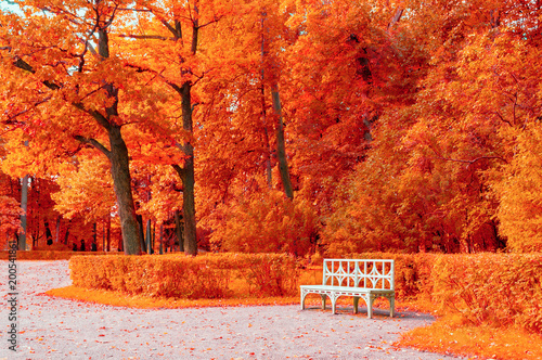 Foto op Canvas Baksteen Autumn colorful landscape. Wooden white bench in the autumn park under yellowed autumn trees