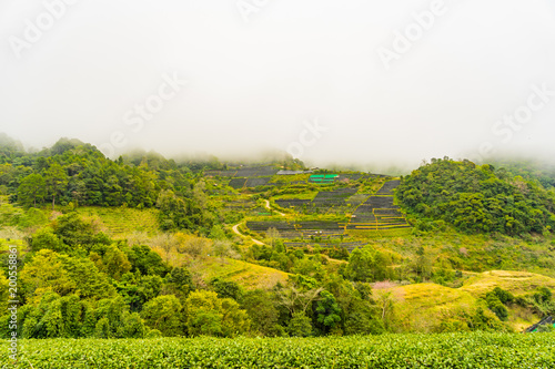 Tuinposter Pistache Green tea plantation farm landscape hill cultivation