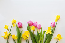 Tulips And Daffodils Are Brigh...
