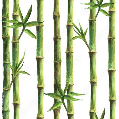 zielony-bambus-wynika-i-pozostawia-wzor