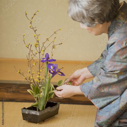 生け花をするシニア女性