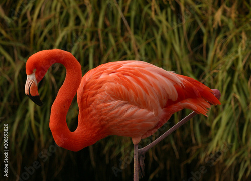 Tuinposter Flamingo Single Flamingo