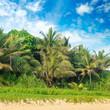 Tropical palms on the sandy beach .