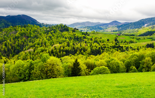 In de dag Lime groen forested hills of mountainous rural area. beautiful springtime countryside landscape.