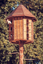 Wooden Dovecote With Pigeons In Forest, Red Filter