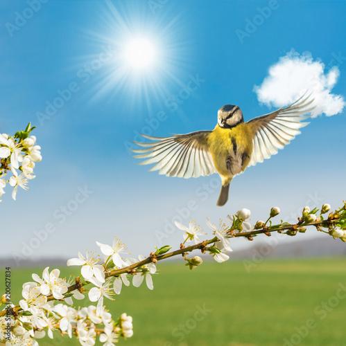 Naklejka premium Wiosna nadchodzi!