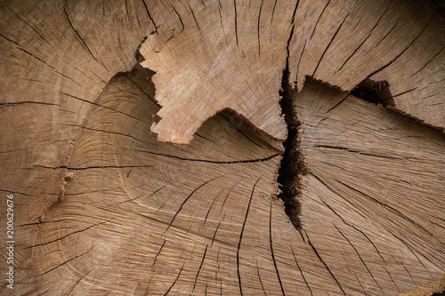 Bois Arbre Matiere Texture Tranche Coupe Scier Tronc Foret Bucheron Veine Chene Forestier Buy This Stock Photo And Explore Similar Images At Adobe Stock Adobe Stock