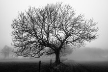 Morning Tree In Black And White