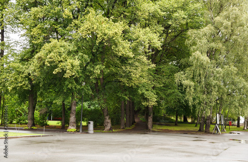 Photo  Trees in the park