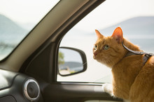 Cat In The Car. Traveling With...
