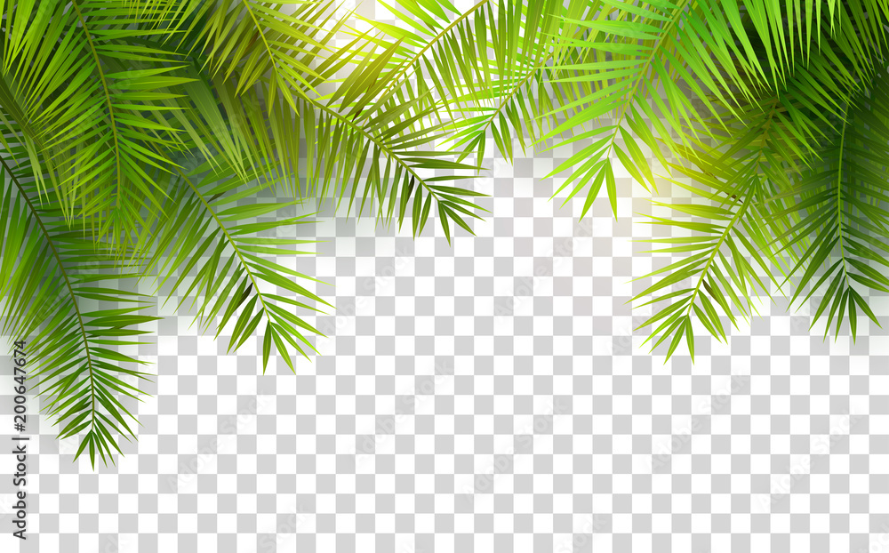 Fototapety, obrazy: Summer palm leaves