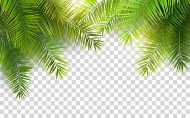 Ljetno lišće palme