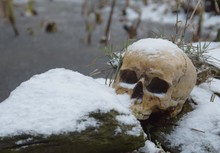 Schädel Im Schnee