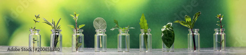 Obraz Homegrown and aromatic herbs in glass - fototapety do salonu
