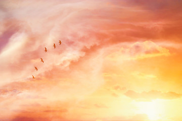 Fototapetasurreal enigmatic picture of flying birds in sunset or sunrise sky . minimalism and dream concept.
