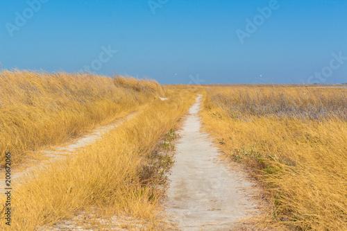 Foto op Aluminium Blauw Steppe. Road. Ukraine, Europe.