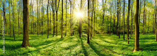 Fotobehang Bossen Beautiful forest in spring with bright sun shining through the trees